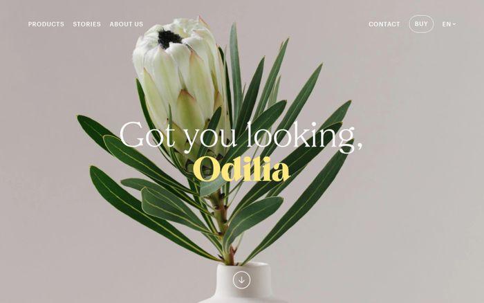 Screenshot of Odilia website