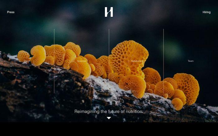 Screenshot of Hologram Sciences website