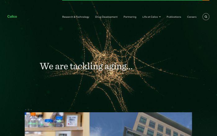 Screenshot of Calico website